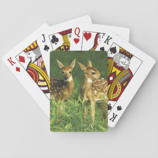 North America, USA, Minnesota. White-tailed 2 Playing Cards