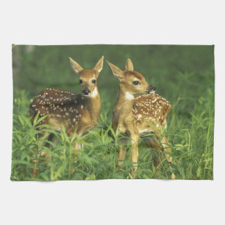 North America, USA, Minnesota. White-tailed 2 Tea Towel