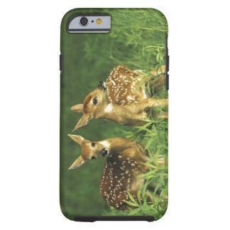 North America, USA, Minnesota. White-tailed 2 Tough iPhone 6 Case