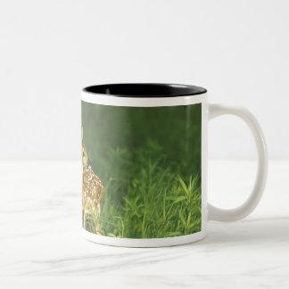 North America, USA, Minnesota. White-tailed 2 Two-Tone Coffee Mug