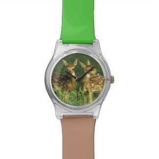 North America, USA, Minnesota. White-tailed 2 Watch
