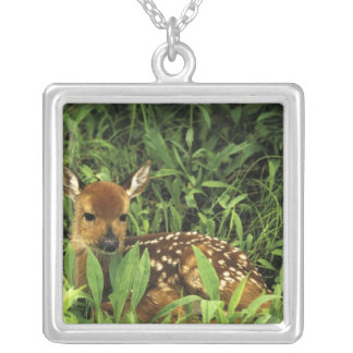 North America, USA, Minnesota. White-tailed Silver Plated Necklace
