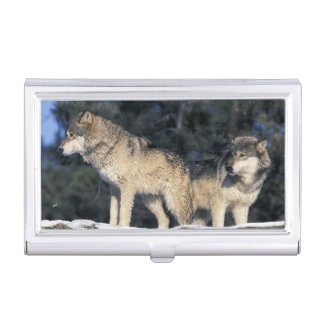 North America, USA, Minnesota. Wolf Canis 2 Business Card Holder