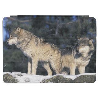 North America, USA, Minnesota. Wolf Canis 2 iPad Air Cover