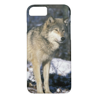 North America, USA, Minnesota. Wolf (Canis 2 iPhone 8/7 Case
