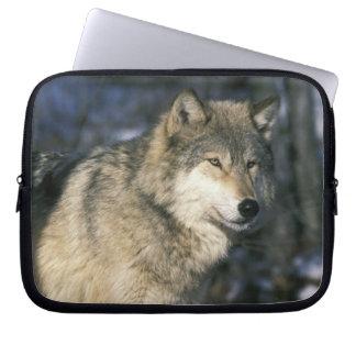 North America, USA, Minnesota. Wolf (Canis 2 Laptop Sleeve