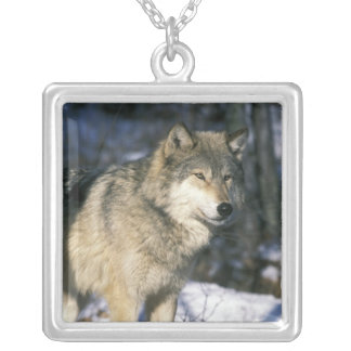 North America, USA, Minnesota. Wolf (Canis 2 Silver Plated Necklace