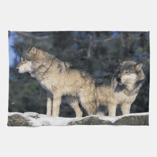 North America, USA, Minnesota. Wolf Canis 2 Tea Towel