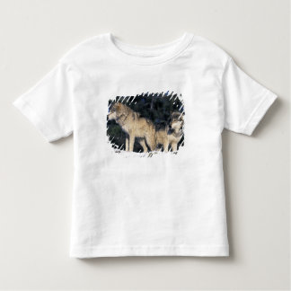 North America, USA, Minnesota. Wolf Canis 2 Toddler T-Shirt