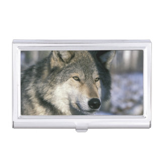 North America, USA, Minnesota. Wolf Canis 3 Business Card Holder