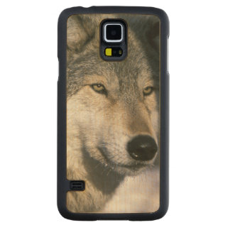 North America, USA, Minnesota. Wolf Canis 3 Carved Maple Galaxy S5 Case
