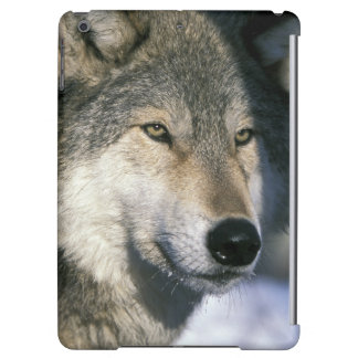 North America, USA, Minnesota. Wolf Canis 3 Cover For iPad Air