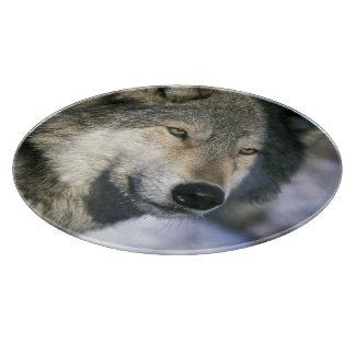 North America, USA, Minnesota. Wolf Canis 3 Cutting Board