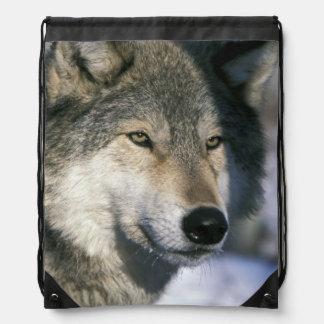 North America, USA, Minnesota. Wolf Canis 3 Drawstring Bag