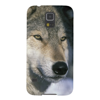 North America, USA, Minnesota. Wolf Canis 3 Galaxy S5 Cover