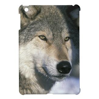 North America, USA, Minnesota. Wolf Canis 3 iPad Mini Case