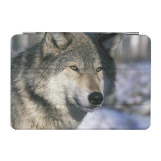 North America, USA, Minnesota. Wolf Canis 3 iPad Mini Cover