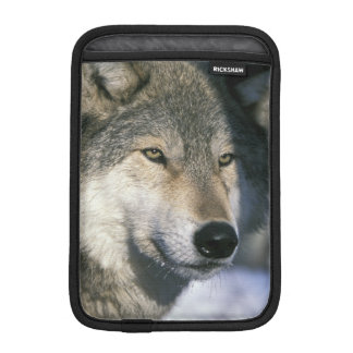 North America, USA, Minnesota. Wolf Canis 3 iPad Mini Sleeve