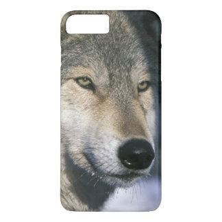 North America, USA, Minnesota. Wolf Canis 3 iPhone 7 Plus Case