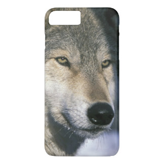 North America, USA, Minnesota. Wolf Canis 3 iPhone 8 Plus/7 Plus Case