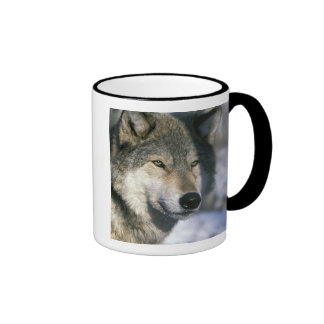 North America, USA, Minnesota. Wolf Canis 3 Coffee Mugs