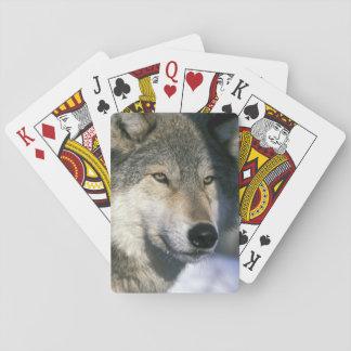 North America USA Minnesota Wolf Canis 3 Poker Cards