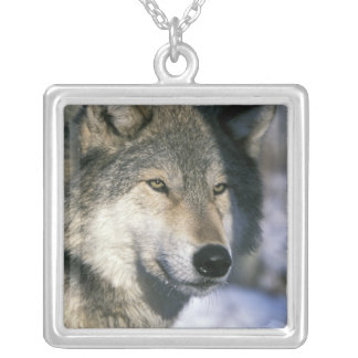 North America, USA, Minnesota. Wolf Canis 3 Silver Plated Necklace