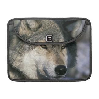 North America, USA, Minnesota. Wolf Canis 3 Sleeve For MacBooks