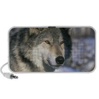 North America USA Minnesota Wolf Canis 3 Mini Speakers