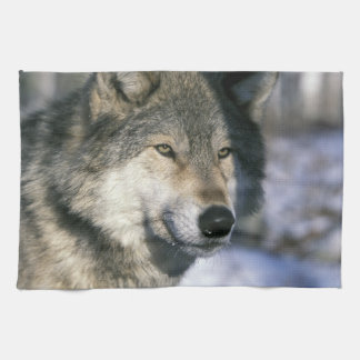 North America, USA, Minnesota. Wolf Canis 3 Tea Towel