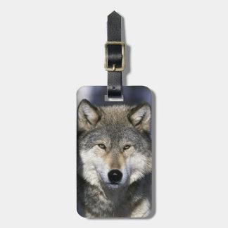 North America, USA, Minnesota. Wolf Canis Bag Tag