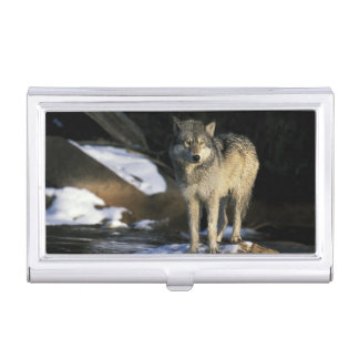 North America, USA, Minnesota. Wolf (Canis Business Card Holder