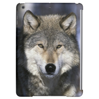 North America, USA, Minnesota. Wolf Canis Case For iPad Air