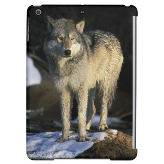 North America, USA, Minnesota. Wolf (Canis Case For iPad Air