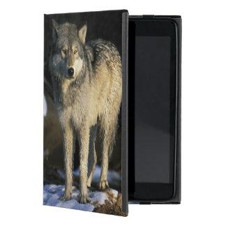 North America, USA, Minnesota. Wolf (Canis Case For iPad Mini