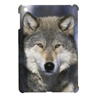 North America, USA, Minnesota. Wolf Canis Case For The iPad Mini