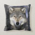 North America, USA, Minnesota. Wolf Canis Cushion