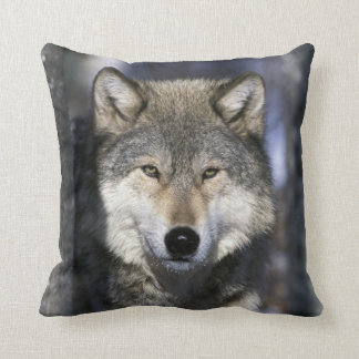North America, USA, Minnesota. Wolf Canis Cushion