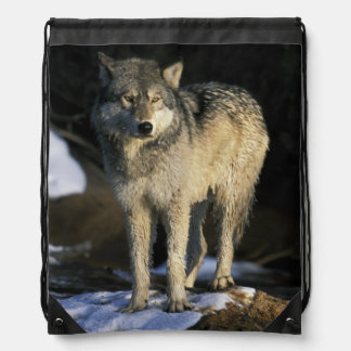 North America, USA, Minnesota. Wolf (Canis Drawstring Bag