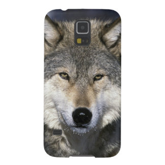 North America, USA, Minnesota. Wolf Canis Galaxy S5 Covers