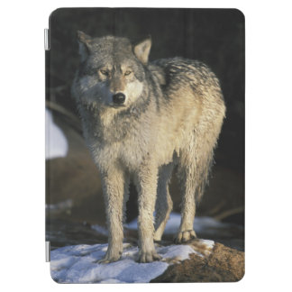 North America, USA, Minnesota. Wolf (Canis iPad Air Cover