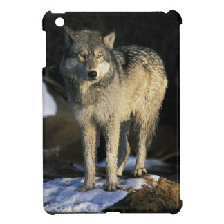 North America, USA, Minnesota. Wolf (Canis iPad Mini Case