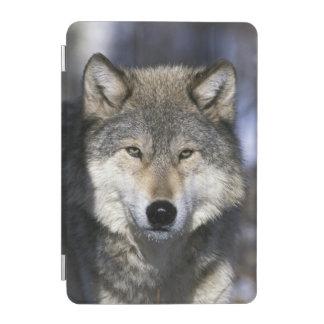 North America, USA, Minnesota. Wolf Canis iPad Mini Cover