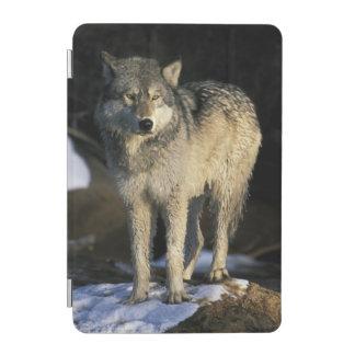 North America, USA, Minnesota. Wolf (Canis iPad Mini Cover