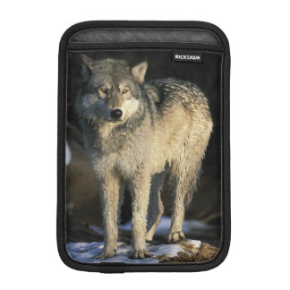 North America, USA, Minnesota. Wolf (Canis iPad Mini Sleeve