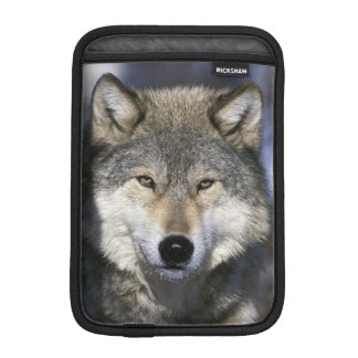 North America, USA, Minnesota. Wolf Canis iPad Mini Sleeve