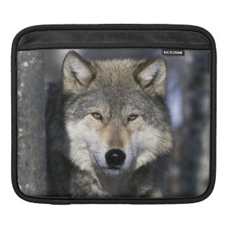 North America, USA, Minnesota. Wolf Canis iPad Sleeve