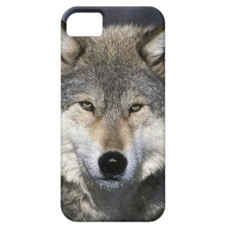 North America, USA, Minnesota. Wolf Canis iPhone 5 Case