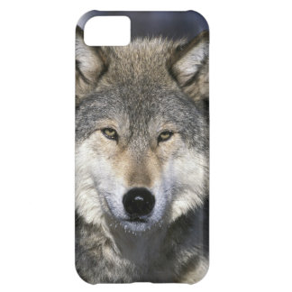 North America, USA, Minnesota. Wolf Canis iPhone 5C Case