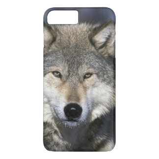 North America, USA, Minnesota. Wolf Canis iPhone 8 Plus/7 Plus Case